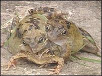 _39920559_frog.jpg